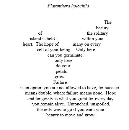 P. holochila Poem